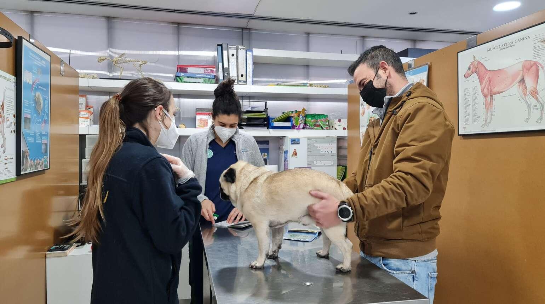 ¿Cuándo llevar a tu mascota al veterinario?