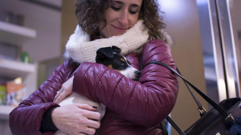 ¿Cómo cuidar de tu mascota?