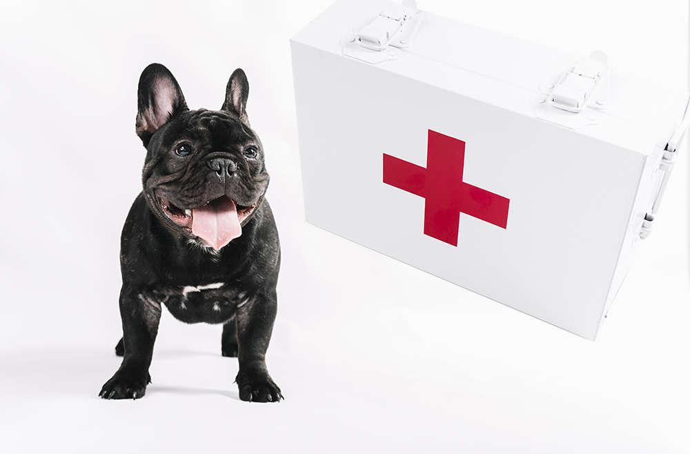 Qué incluir en un botiquín de primeros auxilios para mascotas