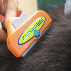 cepillo-perros