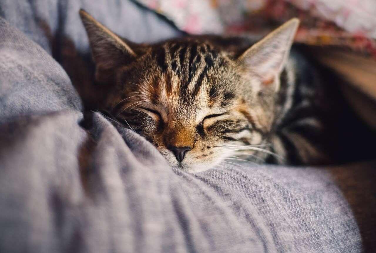 Vitaminas y minerales esenciales para tu gato