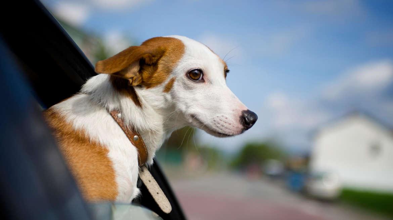 Documentación obligatoria para viajar con tu mascota dentro de la Unión Europea